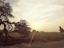 Glanzende zon stock foto's
