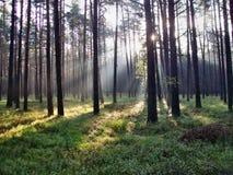 Glanzende zon in het bos Royalty-vrije Stock Foto's