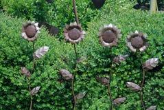 Glanzende Zonnebloemen Stock Fotografie