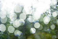 Glare on a background of green summer foliage Royalty Free Stock Photography
