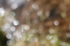 Glare bokeh in water. In sunny spring day Stock Photography