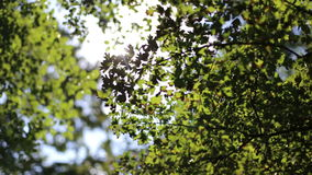 Glare of the sun streaming through the leaves of trees. The green trees and the wind stock video footage