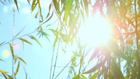 Glare of the sun in a willow stock video footage