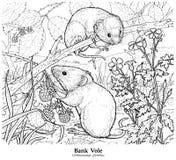 Glareolus do Clethrionomys da ratazana do banco ilustração stock
