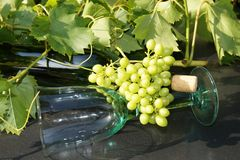 Glas και μπουκάλι κρασιού Στοκ Εικόνες