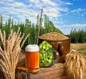 Glas bier en hop Stock Afbeelding