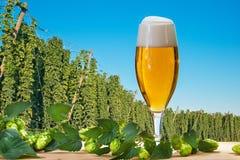 Glas bier met hopgebied royalty-vrije stock afbeelding