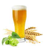 Glas Bier mit dem Weizen und Hopfen lokalisiert auf dem weißen backgrou Lizenzfreies Stockbild
