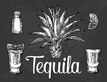 glas und botlle von tequila kaktus salz kalk glas und botlle von tequila kaktus salz und kalk. Black Bedroom Furniture Sets. Home Design Ideas