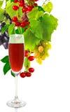 Glas des Weins und der Traubennahaufnahme Lizenzfreies Stockbild