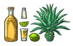 Glas en botlle van tequila Cactus, zout, kalk vector illustratie