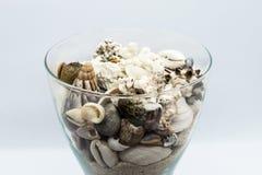 Glas gefüllt mit Muscheln, Korallen und Strand-Sand im weißen Hintergrund Lizenzfreies Stockfoto