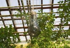 Glas gloeilamp het hangen op een kabel Weerspiegeld Plafond Stock Fotografie