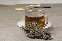 Glas of herbal tea with mugwort Royalty Free Stock Photos