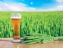 Glas koud bier bij zonsondergang op de achtergrond van tarwegebied en blauwe hemel De recreatie en ontspant Vers gebrouwen aal royalty-vrije stock foto's