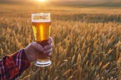 Glas koud bier bij zonsondergang op de achtergrond van tarwegebied en blauwe hemel De ZOMERlandschap Vers gebrouwen aal Royalty-vrije Stock Foto's