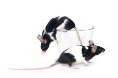 Glas? Mäuse Stockfotos