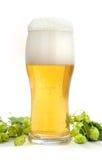 Glas mit Bier Lizenzfreies Stockbild