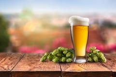 Glas mit Bier und Hopfen auf einem Holztisch Stockbild