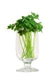 Glas mit Blumenstrauß des falschen Shamrocks Lizenzfreies Stockbild