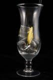 Glas mit Eis und Zitrone Stockfotos