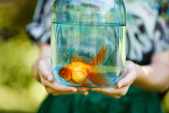 Glas mit Goldfischen in den Händen Stockfoto