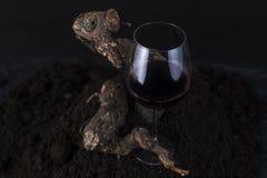 Glas Rode Wijn met Wijnstok op een Zwarte Achtergrond Royalty-vrije Stock Fotografie