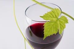 Glas Rotwein, mit einem grünen Blatt lizenzfreies stockbild