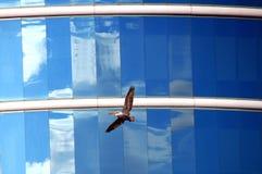 Glas und Flügel Stockfotografie