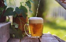 Glas van aard van de bier de houten hop Stock Fotografie