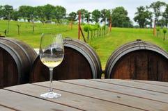 Glas weißer Wein am Weinberg Stockbilder