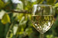Glas Wein im Garten Stockfoto