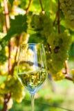 Glas Wein im Weinberg lizenzfreie stockfotos
