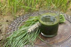 Glas wheatgrass Saft Lizenzfreie Stockfotos
