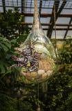 Glasbol het hangen van een kabel in haar bloemen groeit Royalty-vrije Stock Fotografie