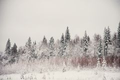 glaserad skog för naturlandskapvinter Royaltyfri Bild