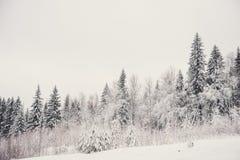 glaserad skog för naturlandskapvinter Royaltyfri Fotografi
