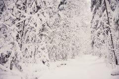 glaserad skog för naturlandskapvinter Arkivbild