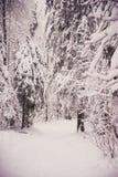 glaserad skog för naturlandskapvinter Arkivbilder