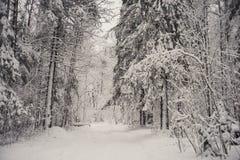 glaserad skog för naturlandskapvinter Royaltyfri Foto