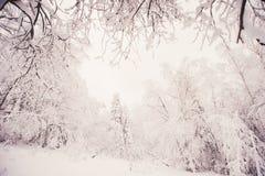 glaserad skog för naturlandskapvinter Arkivfoton