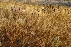 Glaserade gräs, Wilton Park And Preserve, Saratoga County, New York USA arkivfoto
