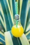 Glasflaska för ljus kula med nytt pressande orange tropiska frukter Juice Standing på Agavebladet Sjösidastrandsemester Royaltyfria Foton