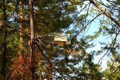 Glasflaskan på en frunch av en sörja i en skog Arkivbilder