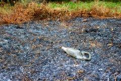Glasflaskor som bränns av branden Arkivbild