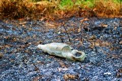 Glasflaskor som bränns av branden Royaltyfri Foto