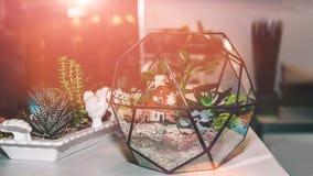 Glasgebied voor thuis het kweken van kleine succulents Huisinstallaties Art royalty-vrije stock foto