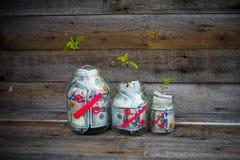 Glasgefäße mit Geld (Dollar) von denen der Baumsprössling wächst Lizenzfreie Stockbilder