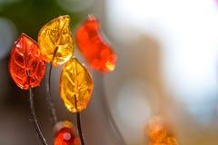 Glasgetreide Stockbild