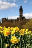 Glasgow, la universidad con los narcisos fotos de archivo libres de regalías